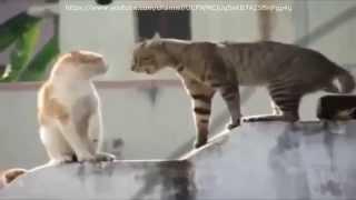 Бешеные коты вызывают демонов !