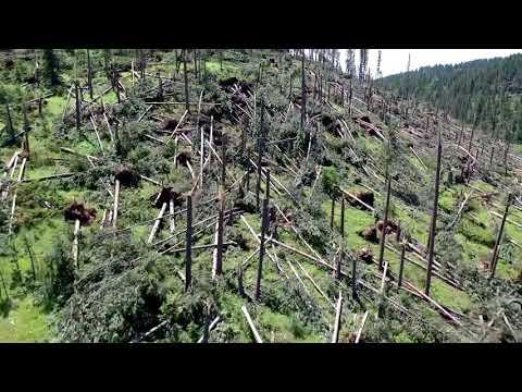 INCREDIBLE Tornado Damage In The Mountains! Black Hills, SD EF2 Tornado