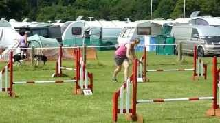 2kg Min Pin Winning Uk Kc Small Agility G3