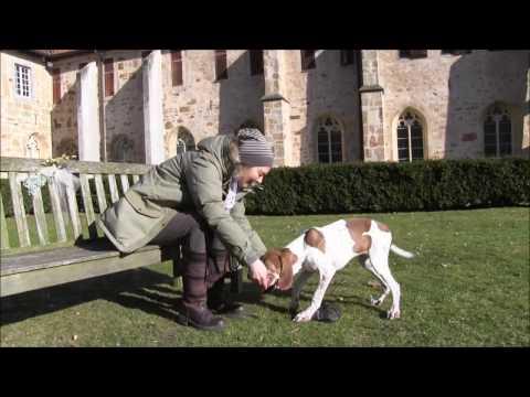 Das Welpen1x1-Teil 3: Spaziergangsstart, erstes Leinelaufen, Welpentraining. Hundeschule Loewenzahn