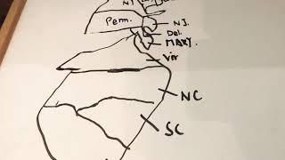 美国历史第二课,北美十三州(上),North American Thirteen Colonies I