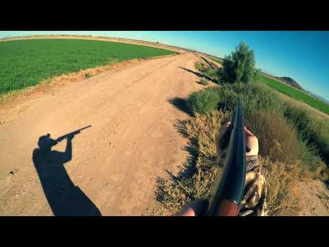 Weekend Series: Arizona Quail Hunt 4K