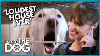 Non-stop Dog Barking is Making Owner DEAF | It's Me or the Dog