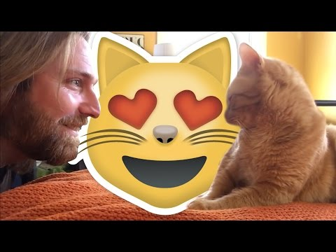 Owner Gets Vengeance On His Cat | What's Trending Now