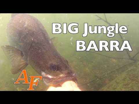 Fishing Big Jungle Barramundi Andysfishing Andy's Fish Video EP.250
