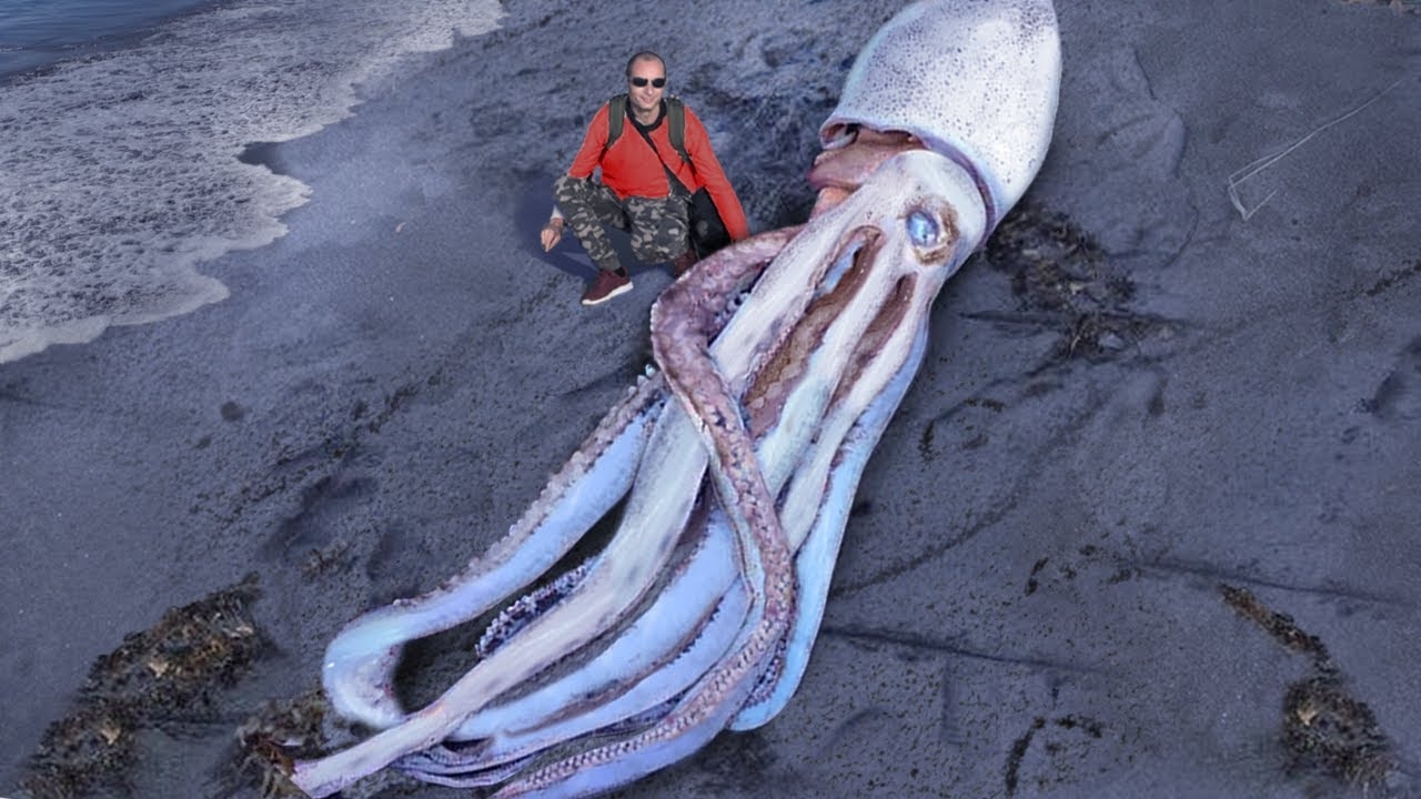 10 Biggest Sea Creatures Ever Found On The Beach!