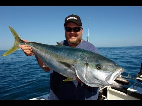 SOUTHERN YELLOWTAIL KINGFISH TOPWATER - YouFishTV part 2