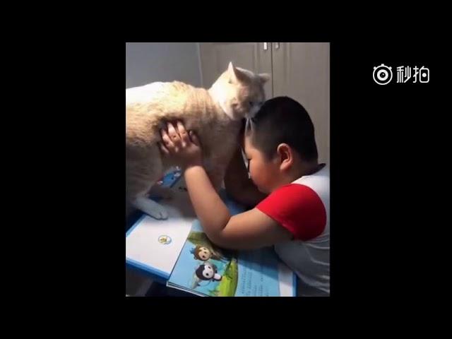 Кога мачката не ти дава да напишеш домашно