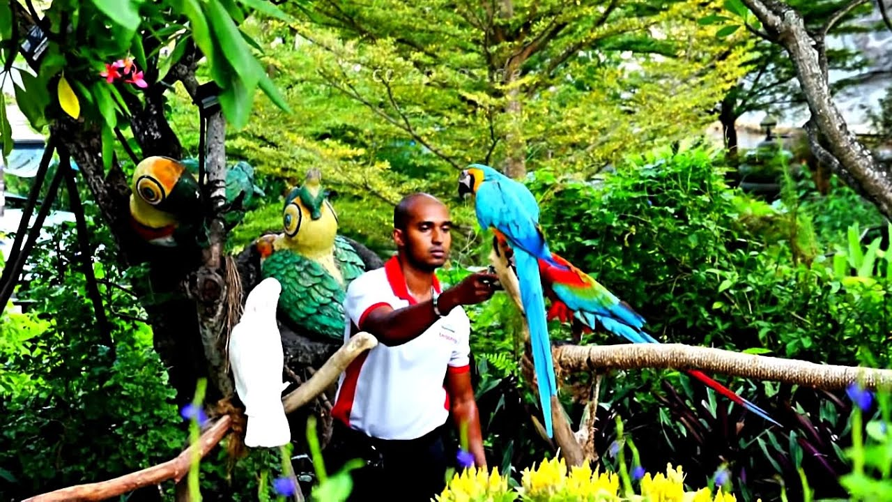 Rainforest Birds Flying Colorful Parrots from ...