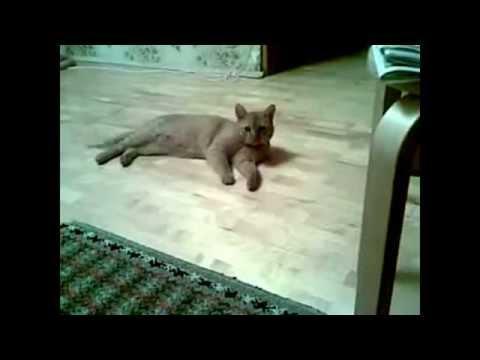Коты бесятьса! Прикольные бешеные коты.Нарезка приколов про котов! - видео онлайн