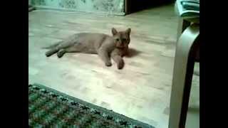 Коты бесятьса! Прикольные бешеные коты.Нарезка приколов про котов!