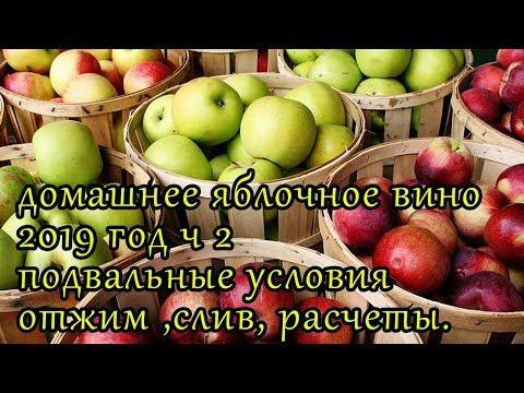 домашнее яблочное вино в подвальных условиях2019 ч2