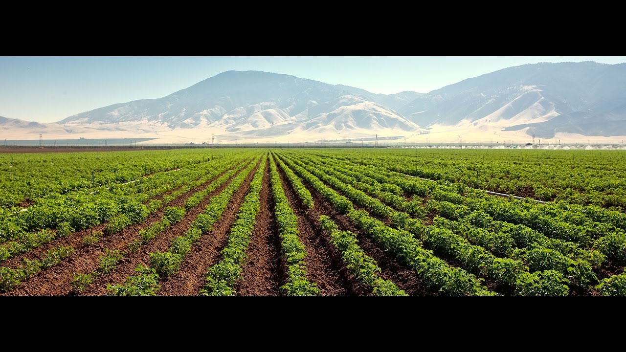 role of agriculture Agriculture is the art and business of cultivating soil, producing crops and raising livestock according to a world bank report in 2005, stated that about two thirds of the world population poor are mainly.
