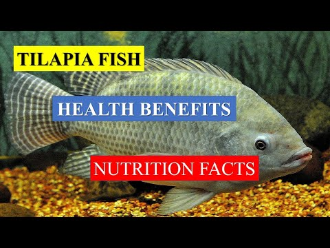 TILAPIA FISH  HEALTH BENEFITS AND NUTRITION FACTS