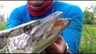 Progetto Predatori Zone No Kill Verona Silver Salmon Club