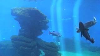 Аквариум Пальмы Аквариум Пальма-де-Майорка(Аквариум Пальмы Достопримечательности Испании.Аквариум Пальмы — один из лучших аквариумов Европы, был..., 2014-10-02T18:19:47.000Z)