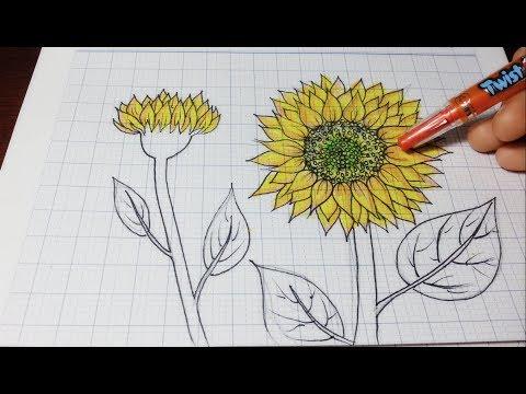 Hướng Dẫn Vẽ Hoa Hướng Dương �ơn Giãn Nhất/ How to draw sunflowers easy