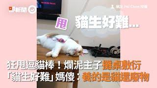 狂甩逗貓棒!爛泥主子攤桌敷衍 「貓生好難」媽傻:養的是貓還廢物