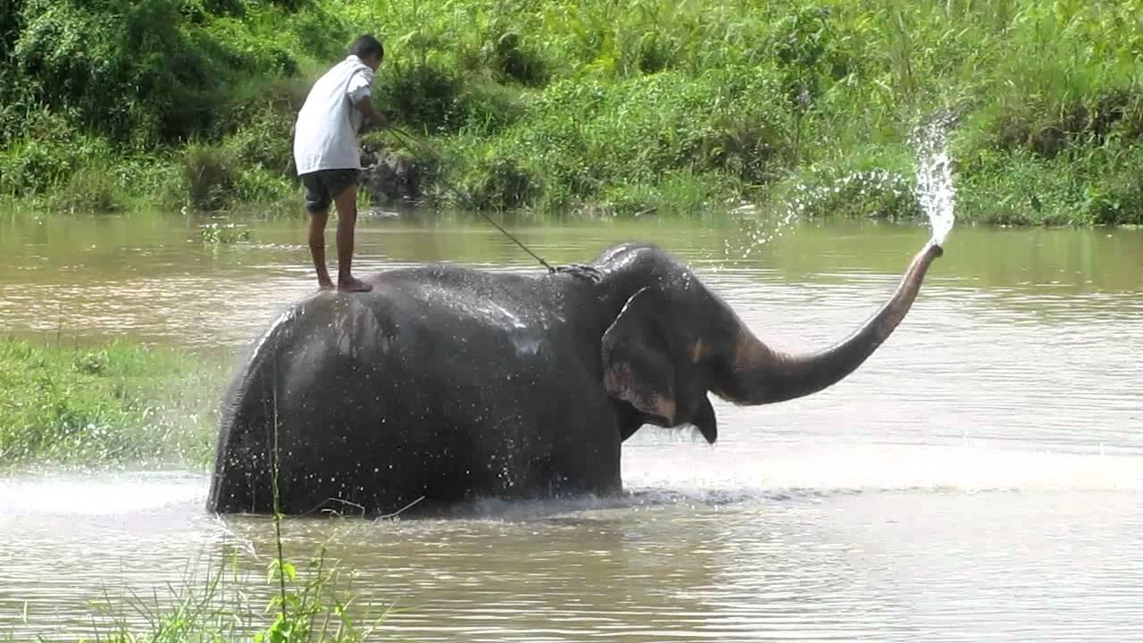 Elephant spraying water - photo#5