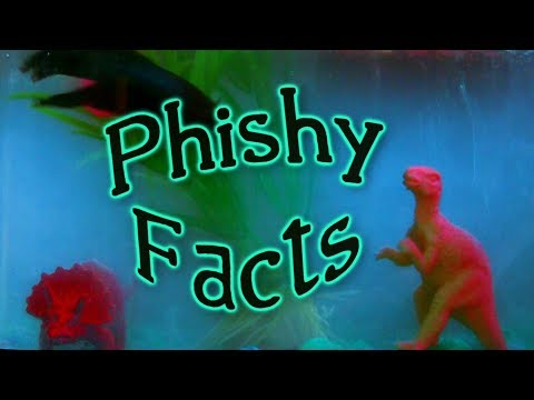 Phishy Facts 1 Your Videos on VIRAL CHOP VIDEOS