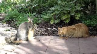 W T F ? ! cat and rabbit\bunny humping LOL