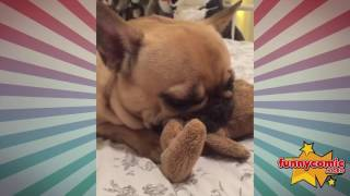 Top 30 Funny and Cutest Dog Videos 1