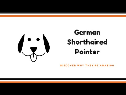 German Shorthaired Pointer - German Shorthaired Pointer Facts
