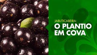 Como plantar uma Jabuticabeira? (Passo a passo)