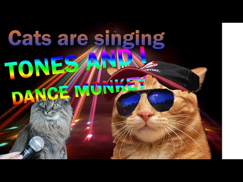 Tones and I dance monkey cats are singing
