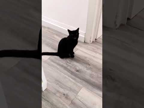 There is so much to say... Cute black cat meowing 😺