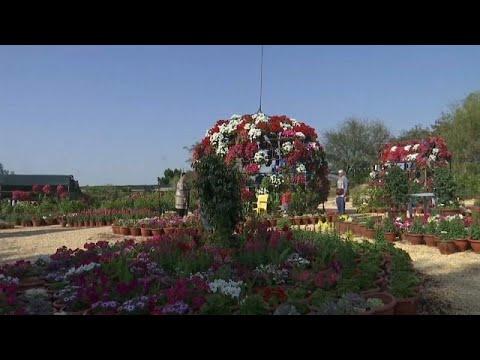 الأردن يستقبل الربيع ويحتفل بالأم وذكرى الكرامة بـ 20 ألف نبتة في كرنفال الورود…  - نشر قبل 4 ساعة