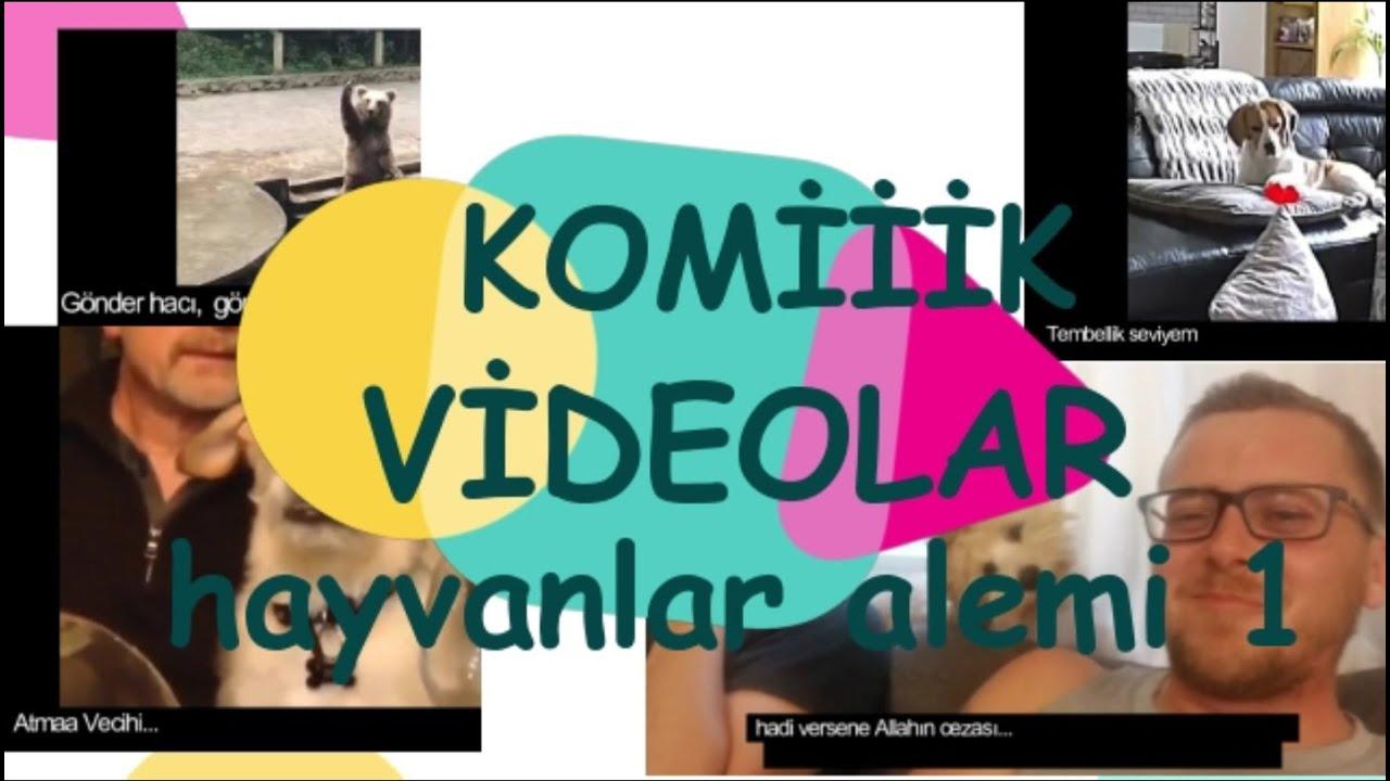 Çooook Komiiik videolarda eğlenceli hayvanlar alemi 1