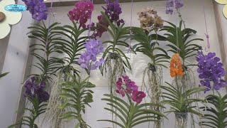 Миллион орхидей в одном месте- это зрелище никого не оставит равнодушным!!!