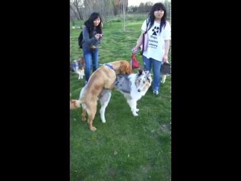 4/6 Dog Meeting - Part 6