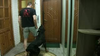 Дрессировка собак в Виннице. ШОС