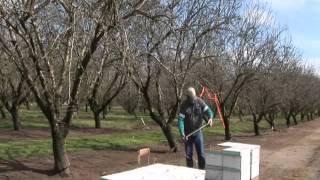 Abeilles  du bétail à miel dans les enclos des colonies humaines