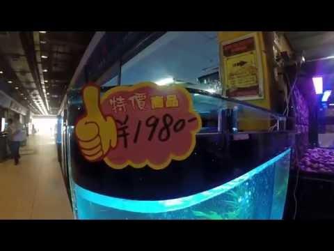 aquarium shop in china