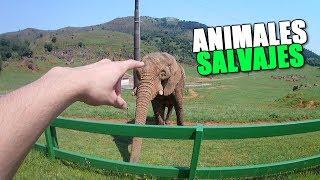 VOY A UN PARQUE NATURAL A VER ANIMALES SALVAJES + Regalo Banggood (SmartWatch I4)