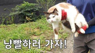 9마리 고양이 단체 냥빨 | 이불 빨래 | 진드기 박멸