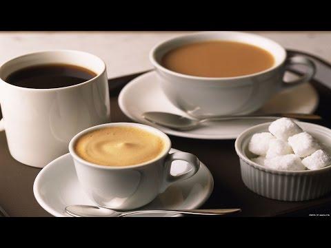 Чайный Гриб — Польза и Вред Для Здоровья