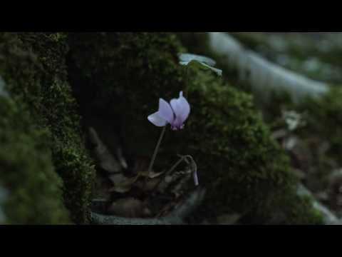 Sicilian Ghost Story - In silenzio, il bosco si fa sempre più freddo... streaming vf