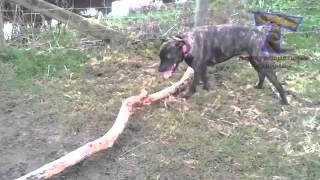 Собаки смешно падают!