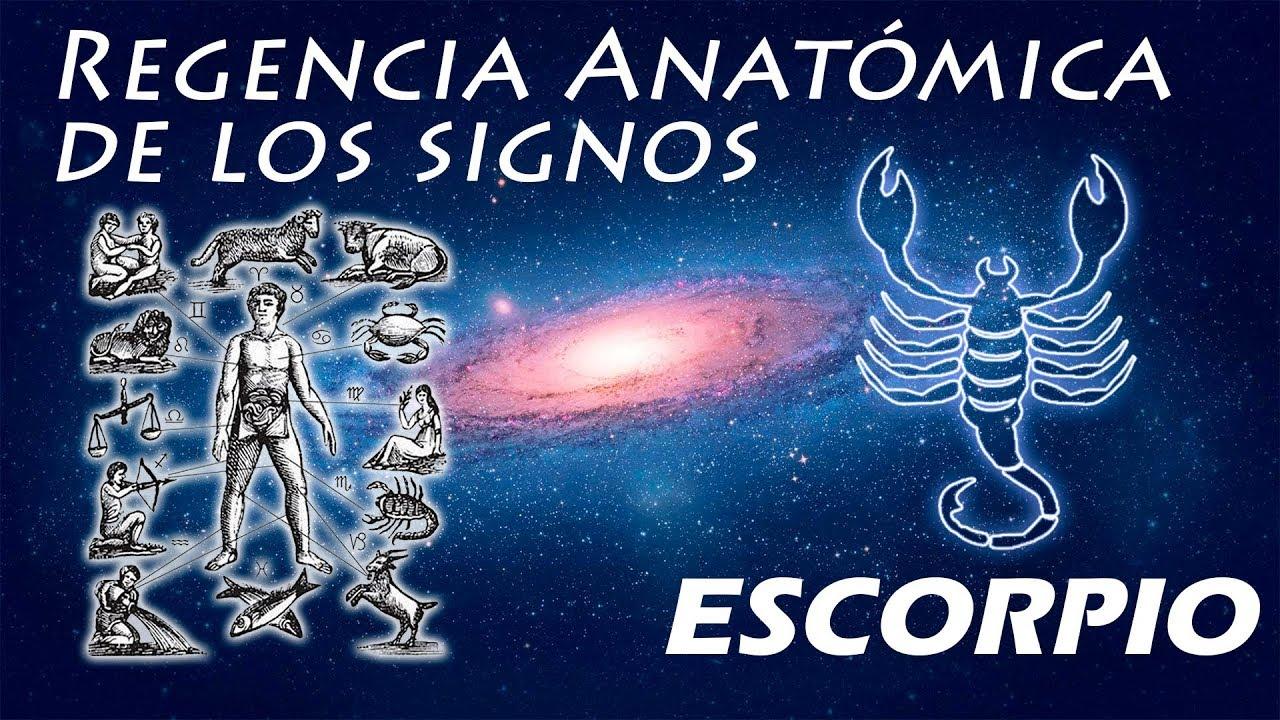 ESCORPIO Astrología Básica REGENCIA ANATÓMICA DEL SIGNO DE ESCORPIO ...
