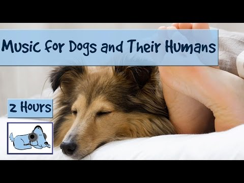 calming-music-for-dogs-and-their-humans!