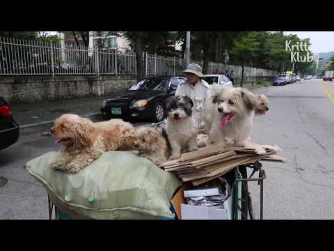 Monk Picks Up All The Stray Dogs On The Street | Kritter Klub