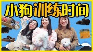小狗們的訓練時間,看誰學的最好! | 小伶玩具 Xiaoling toys thumbnail