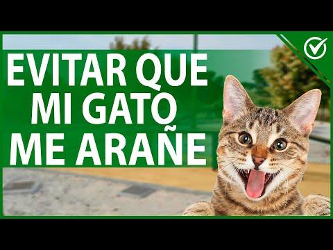 Cómo Evitar que mi gato 🐱 Trepe o suba por mi Pierna y me Arañe - Trucos Útiles 🐱