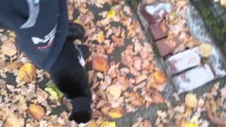 Dziki Kot zjadl ciastko z marichuana i mnie natychmiast pokochal :) Szok !