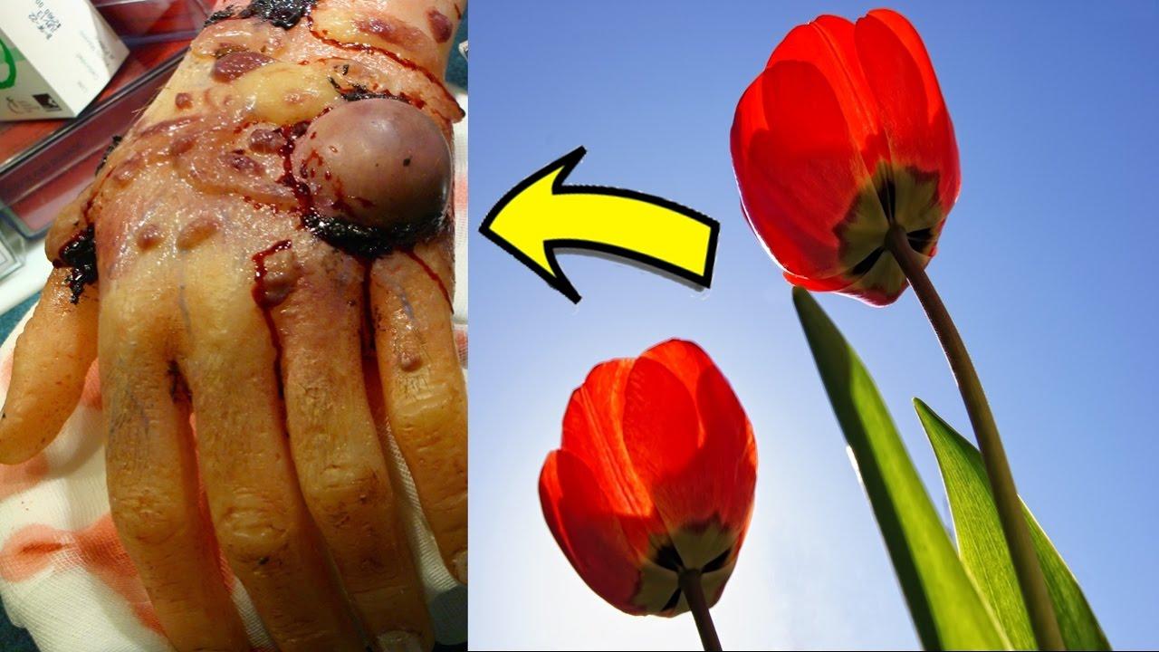 7 plantas hermosas que pueden matarte y no lo sab as youtube - Fotos de plantas bonitas ...