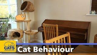 My cat keeps hiding | Behaviour guides: Episode two